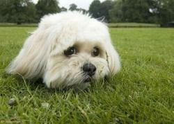 Микола Паламарчук хоче заборонити фотографуватися з тваринами
